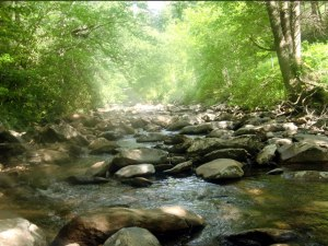 Picture of fishing stream